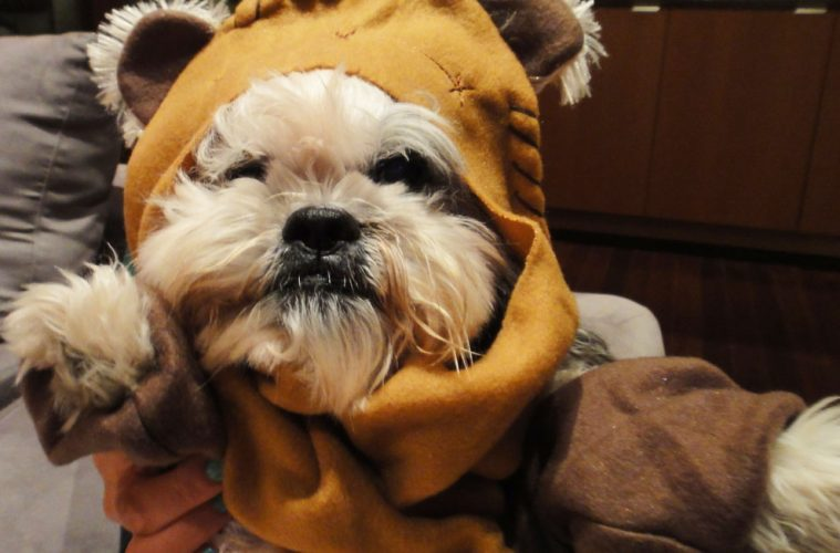 Star wars ewok dog costume lazyop star wars ewok dog costume solutioingenieria Image collections